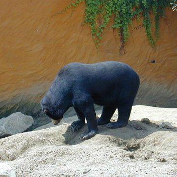 Le Zoo de Trégomeur